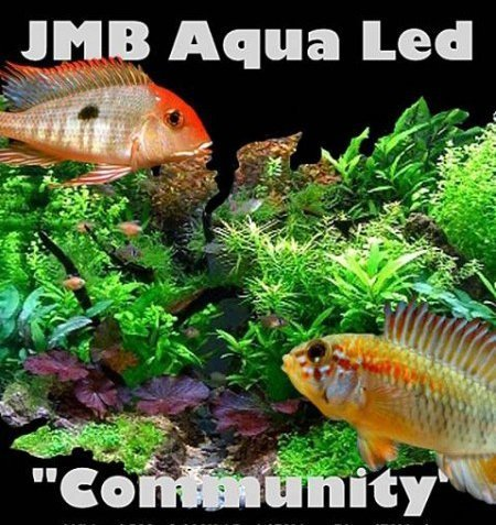 jmb ledverlichting aquariumhuis friesland