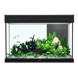 kopen aquarium