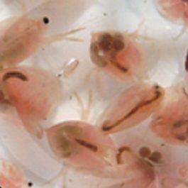 Levend voer aquariumhuis Friesland