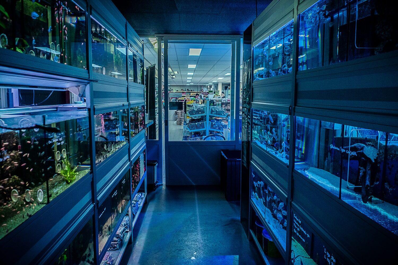 aquariumwinkel , aquariumverkoop aquariuplanten aquariumartikelen
