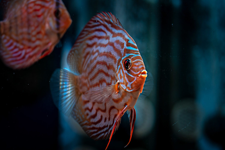 aquarium webwinkel shop